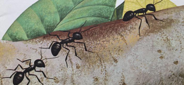 Namen van insecten in het Italiaans