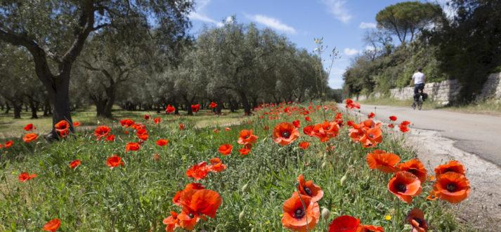 Fietsen in de Salento - Puglia